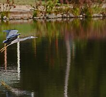 Flying Over The Pond by Evita