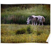Down in the meadow Poster