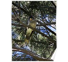 Bird On A Tree Poster