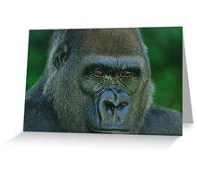 Western Lowland Gorilla Up Close Greeting Card