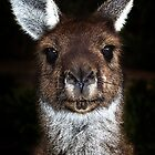 G'day Mates, I'm Lookin' at YOU ! by Peter Evans