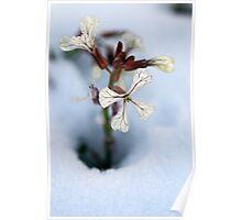 goodbye winter, hello springtime Poster