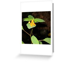 Spotted Jewel Weed; Touch-Me-Not Greeting Card