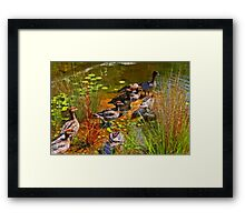 Ducks At The Pond Framed Print