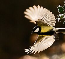 Feather Fan by Paul Ritchie