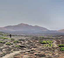 Le Geria, Lanzarote by dgbimages