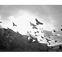 Beautiful rats wi wings Photographic Print