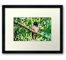 Noisy Miner - Bad Hair Day  Framed Print