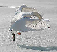 Ice Dance by Elaine  Manley