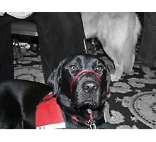"Photos for Mom: ""I am a good dog and a great partner"" Photographic Print"
