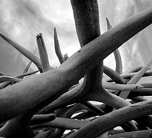 antlers - black and white by centerpoint