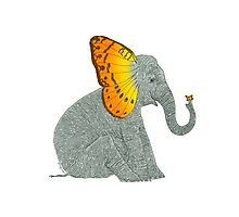 Elephant looking at Butterfly Photographic Print