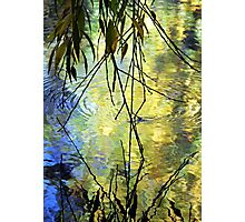 Blue Yellow Willow Water Photographic Print