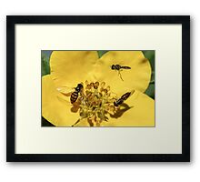 Colorful Flies Framed Print