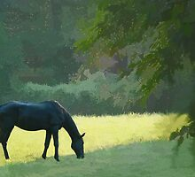 In the field by OPSTER