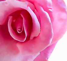 Pink Rose by OPSTER