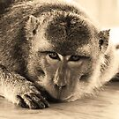 Temple monkey in sepia by Michael Brewer