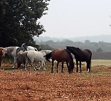New Forest Ponies of Hampshire England by Val  Brackenridge