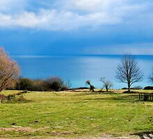 A Farm With A View ~ Lyme Regis by Susie Peek