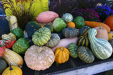 All Kinds of Gourds! by MaryinMaine