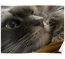 cat in a basket Poster