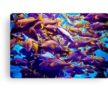 Fish Frenzy Canvas Print