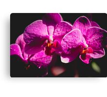 Fuchsia Orchid Canvas Print