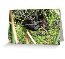 Common Moorhen ~ In a Tree ☺ Greeting Card