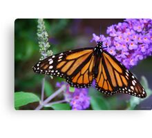 Monarch Butterfly on Lilacs Canvas Print