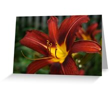 Red and Yellow Day Lily Greeting Card