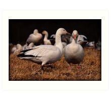 Gossiping Geese Art Print