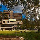 Golden Grove, Sydney University by Samuel Gundry