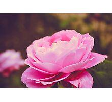 Rose Romance  Photographic Print