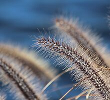 Blue Fuzzies by Gilda Axelrod