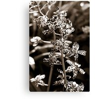 B&W Spotted Orchid Canvas Print