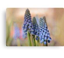 Ringing in Spring Canvas Print