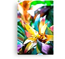 Bromeliad Bloom Canvas Print