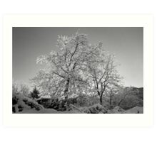 Trees in Snow - Borga Nari - Italia Art Print