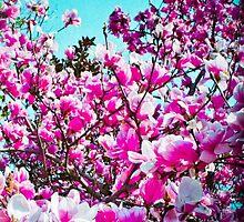 Magnolia Blossoms by Katera Troiano