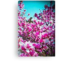 Magnolia Blossoms Canvas Print