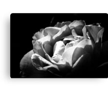 B&W Rose  Canvas Print
