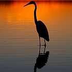 Heron Sunset -  On Lake Weyba Queensland by AMP  Al Melville Photography