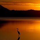 Heron Heaven - Lake Weyba Queensland Australia by AMP  Al Melville Photography