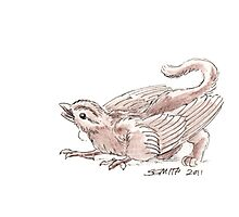 Sketch -- Mythological House Griffin, Sparrow variety Photographic Print