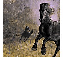 Horse 9 Photographic Print