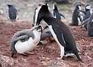 "Chinstrap Penguin and Chick ~ ""Al fresco dining"" by Robert Elliott"