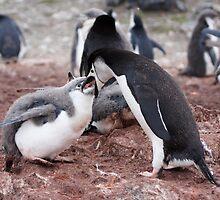 "Chinstrap Penguin and Chick ~ ""Al fresco dining"" by Robert Elliott"