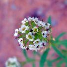 Flower Ball by Sandra Moore