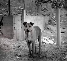 Reservior Dog1 by Patito49