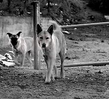 Reservior Dogs 2 by Patito49